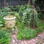Beautiful and Healthy Organic Garden (4)